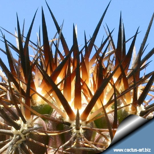Photo Gallery: Photo Gallery: Cactus Spines