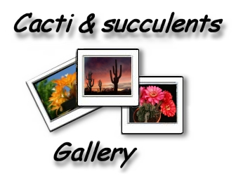 Photo gallery CACTI & SUCCULENTS picture