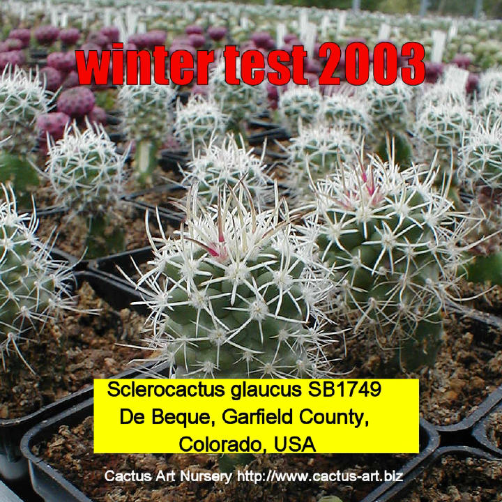 Cactus Cactus Art Nursery Cultivation And Mail
