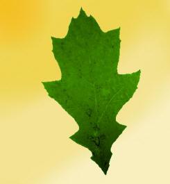 Toothed_leaf.jpg