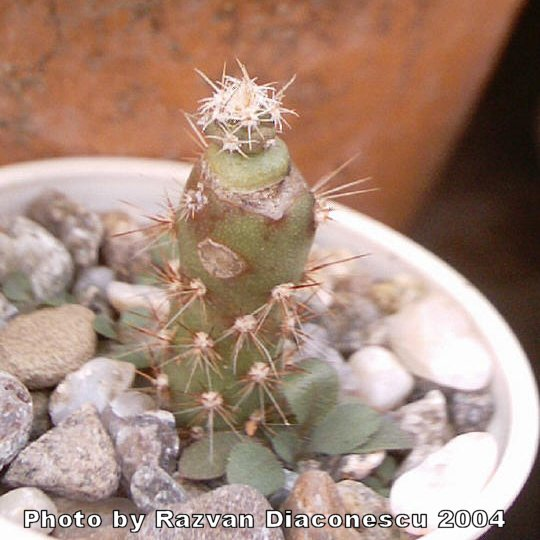 cactus singles & personals Zygocactus is one plant that celebrates winter in style  a member of the cactus family that celebrates the shorter days  singles and women lead charge to.